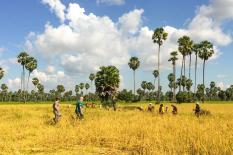 Explore Cambodia along Mekong Trail - experince-rice-field-tour.jpg