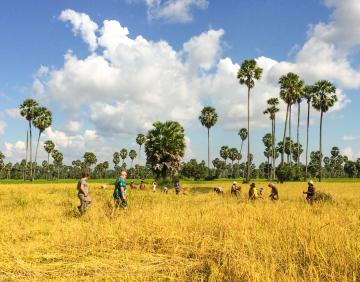 Explore Cambodia along Mekong Trail